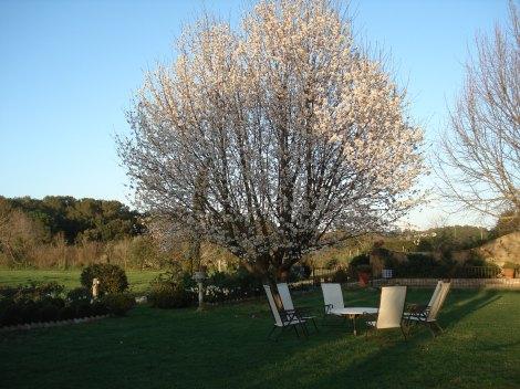 cirerer florit MT2009