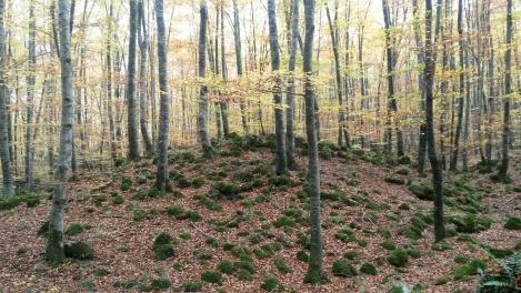 """""""Els arbres son les columnes de la Terra. Quan els haurem destruït tots el cel caurà sobre nosaltes"""" prov. indi"""