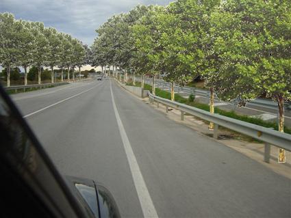 Proposta de SOS Empordanet per a la recuperacio de plataners a la carretera C 31 al seu pas per Ultramort, com anys enrera. L'ajuntament ho va denegar. Foto: L.A.
